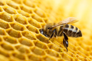Work with an Expert Who Can Help You Manage Your Bee Sting Allergy