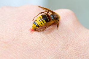 How to Avoid Bees and Other Stinging Insects as the Weather Warms Up