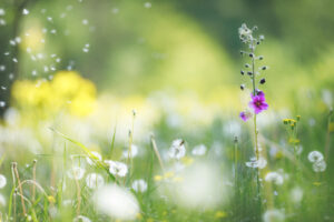 Spring Allergies Are Here: Learn How to Outsmart the Common Symptoms